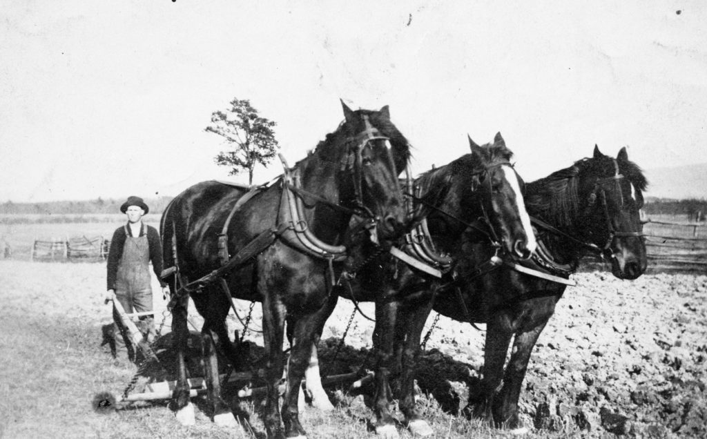 Joseph M. Burke Sr. and team of horses, Fork District, Warren County, circa 1915.